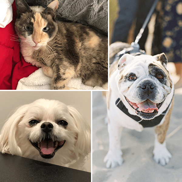 Best Places to Work Bay Area Pets